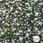 White & lilac flower wall 3